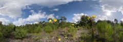 La Baule - forêt d'Escoublac